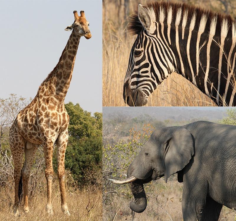 Kruger Park Zuid-Afrika