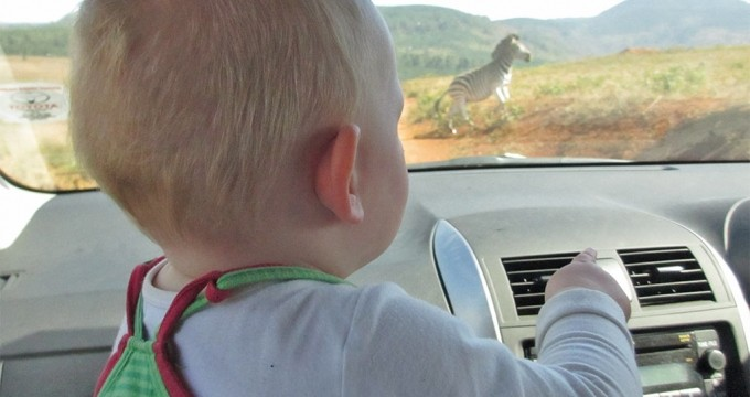 Zuid-Afrika met baby en peuter-reisfilm