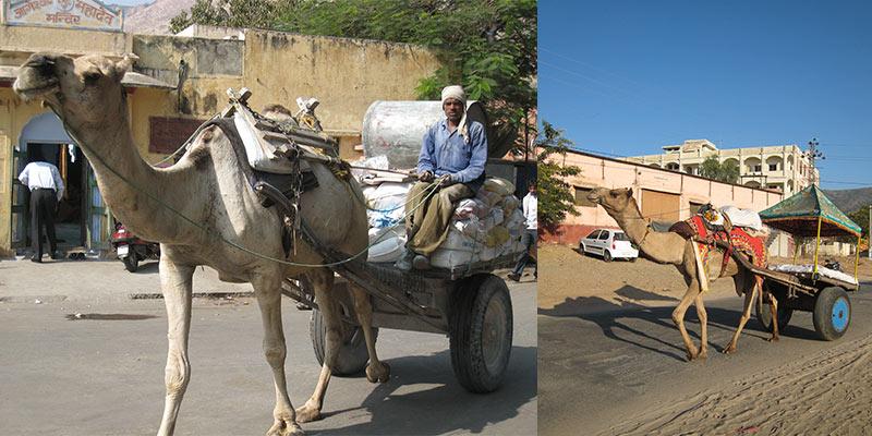 India kamelenkar