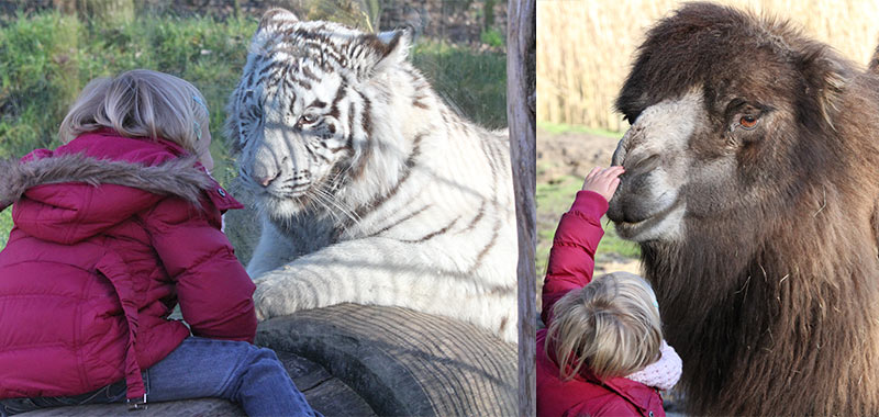 Zoo Parc Overloon contact met dieren