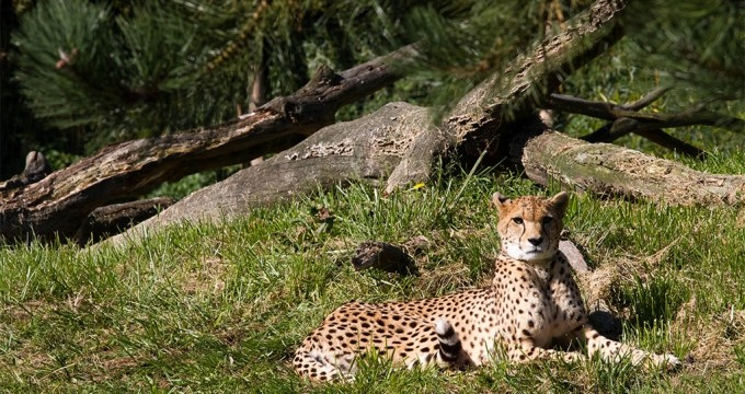 Zoo Parc Overloon