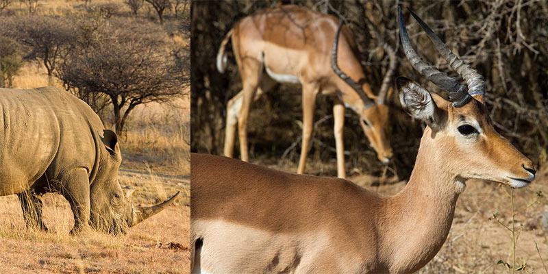 wildlife fotografie: kies het juiste licht