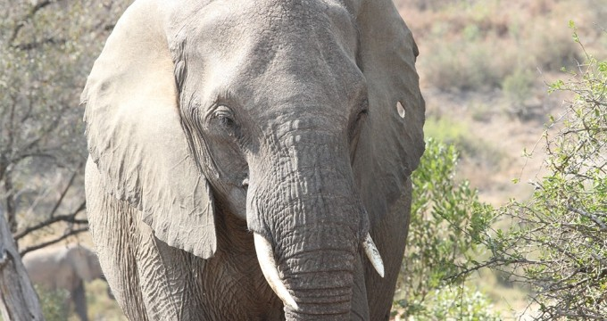 Kruger park wildpark of dierentuin