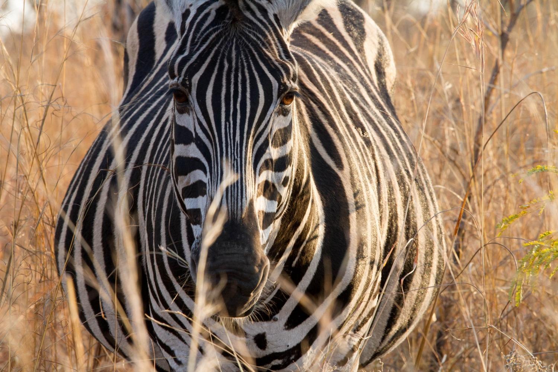 safari fotografie maak oogcontact