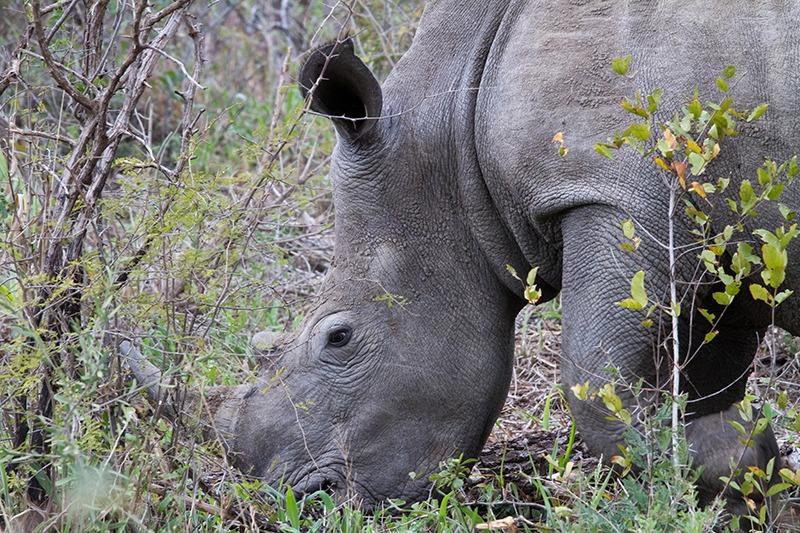 safari fotografie: sta vroeg op