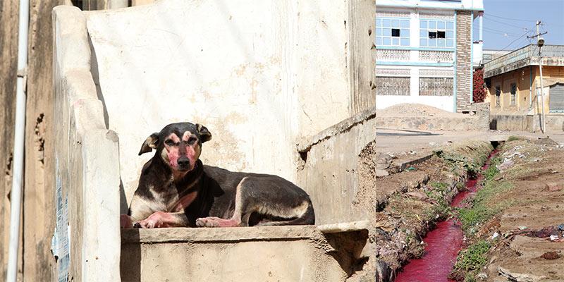 rode hond in Jhunjhunu