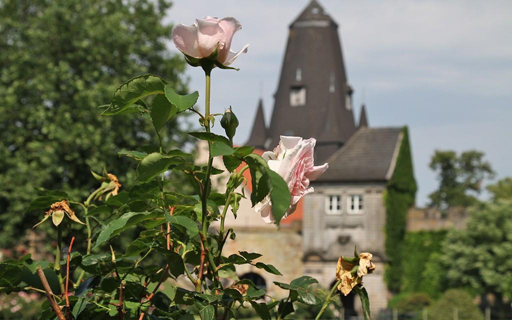 Bad-Bentheim juni