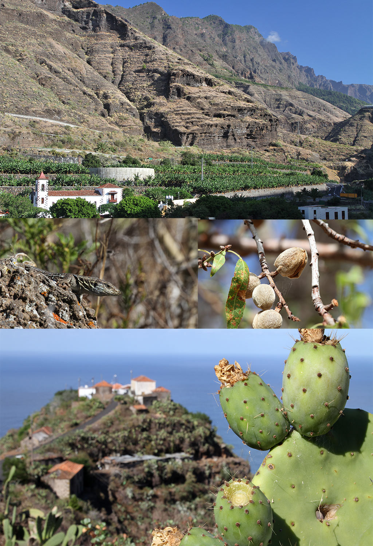Baranco de las Angustias La Palma