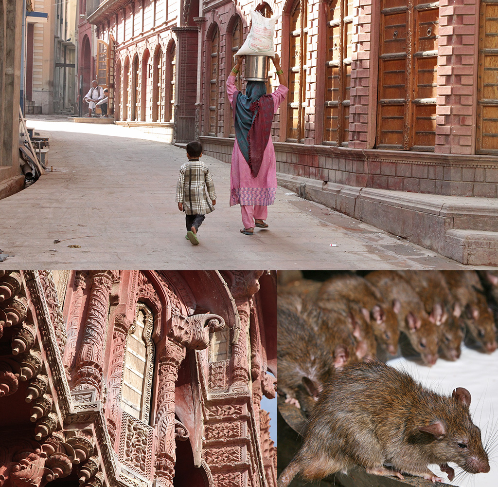 Bikaner en Deshnok Rahasthan