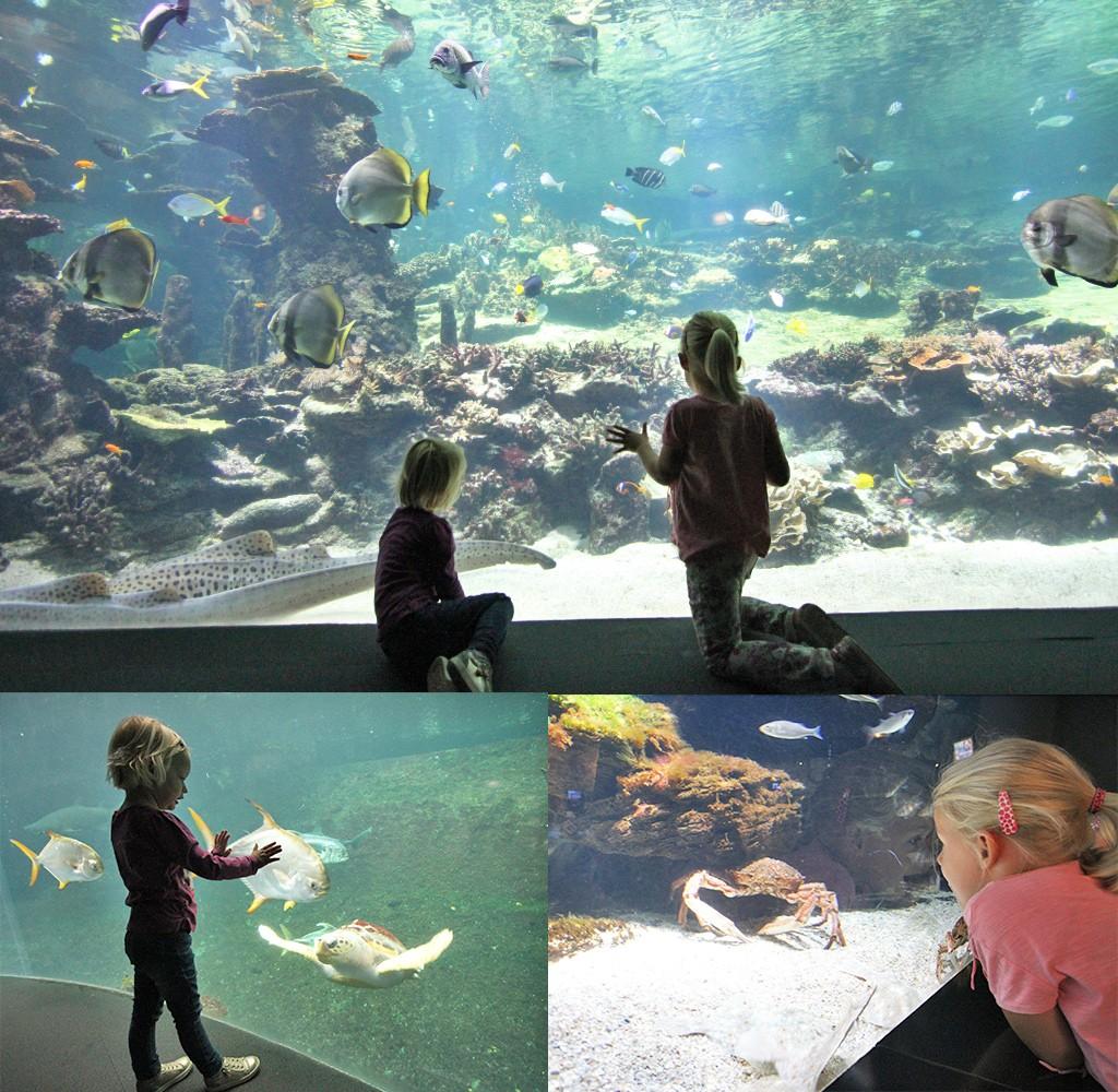 Boulogne-sur-mer aquarium met kinderen
