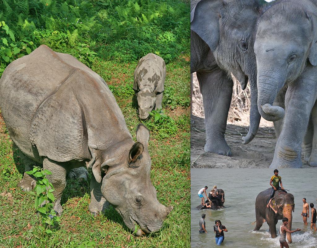 Chitwan National Park toeristische ervaring