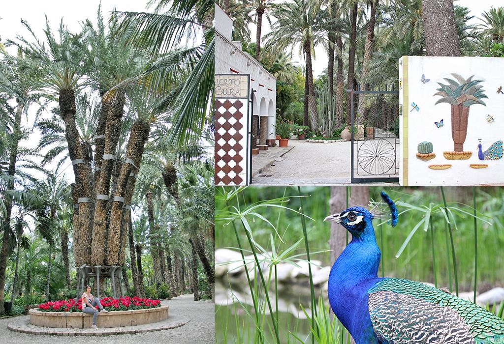 Costa Blanca - Elche Jardín Huerto del Cura