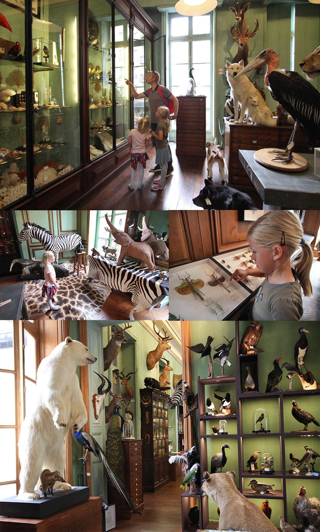 Deyrolle dierenkabinet Parijs