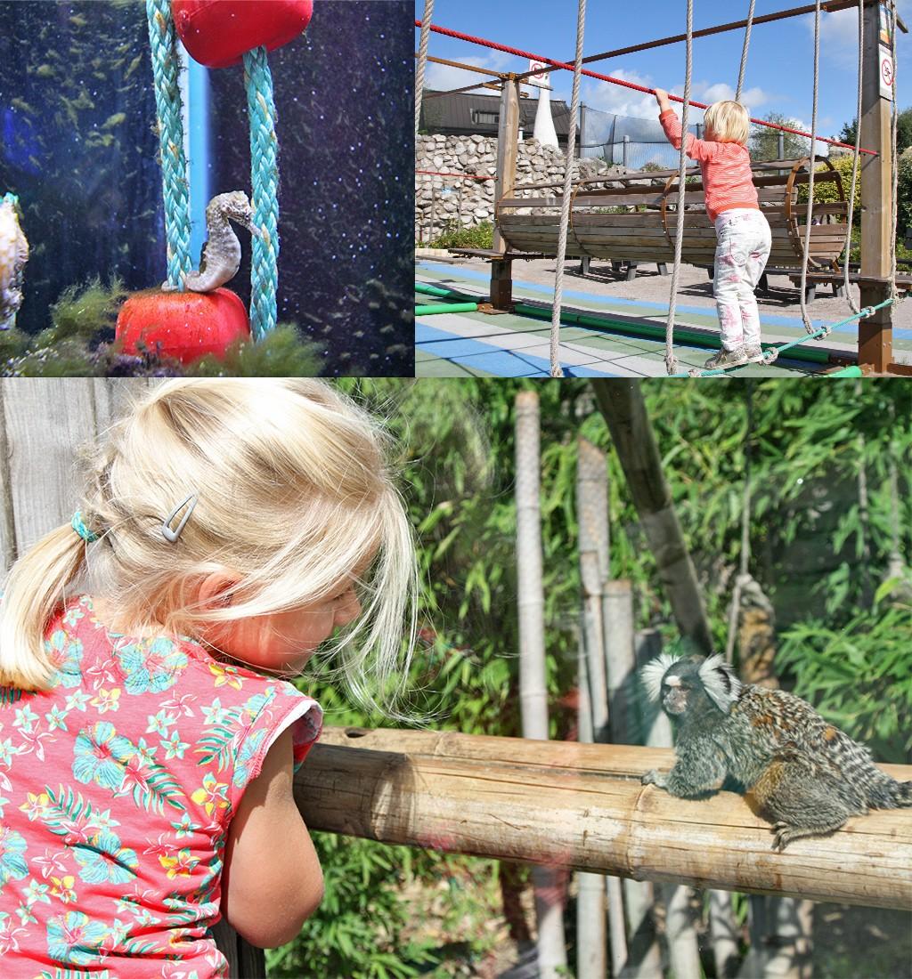 Duinkerke met kinderen aquarium en zoo