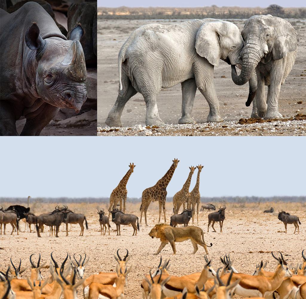 Etosha Namibië
