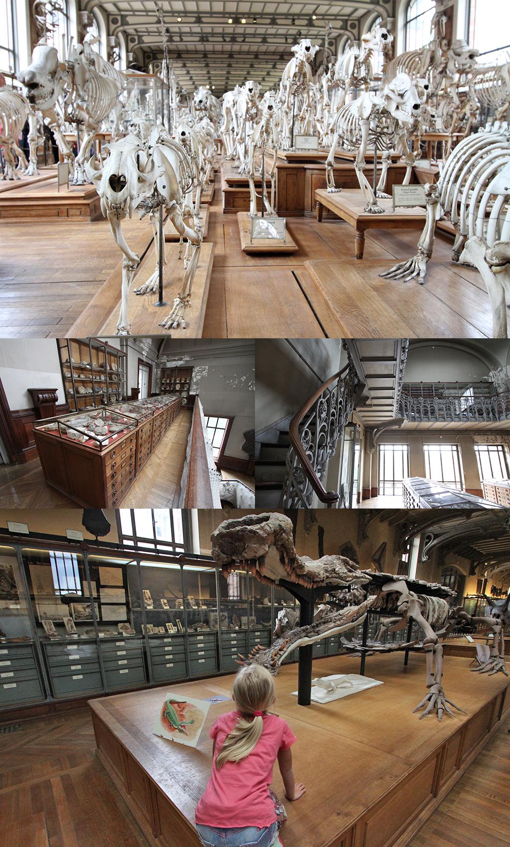 Galérie de Paléontologie et d'anatomie Parijs