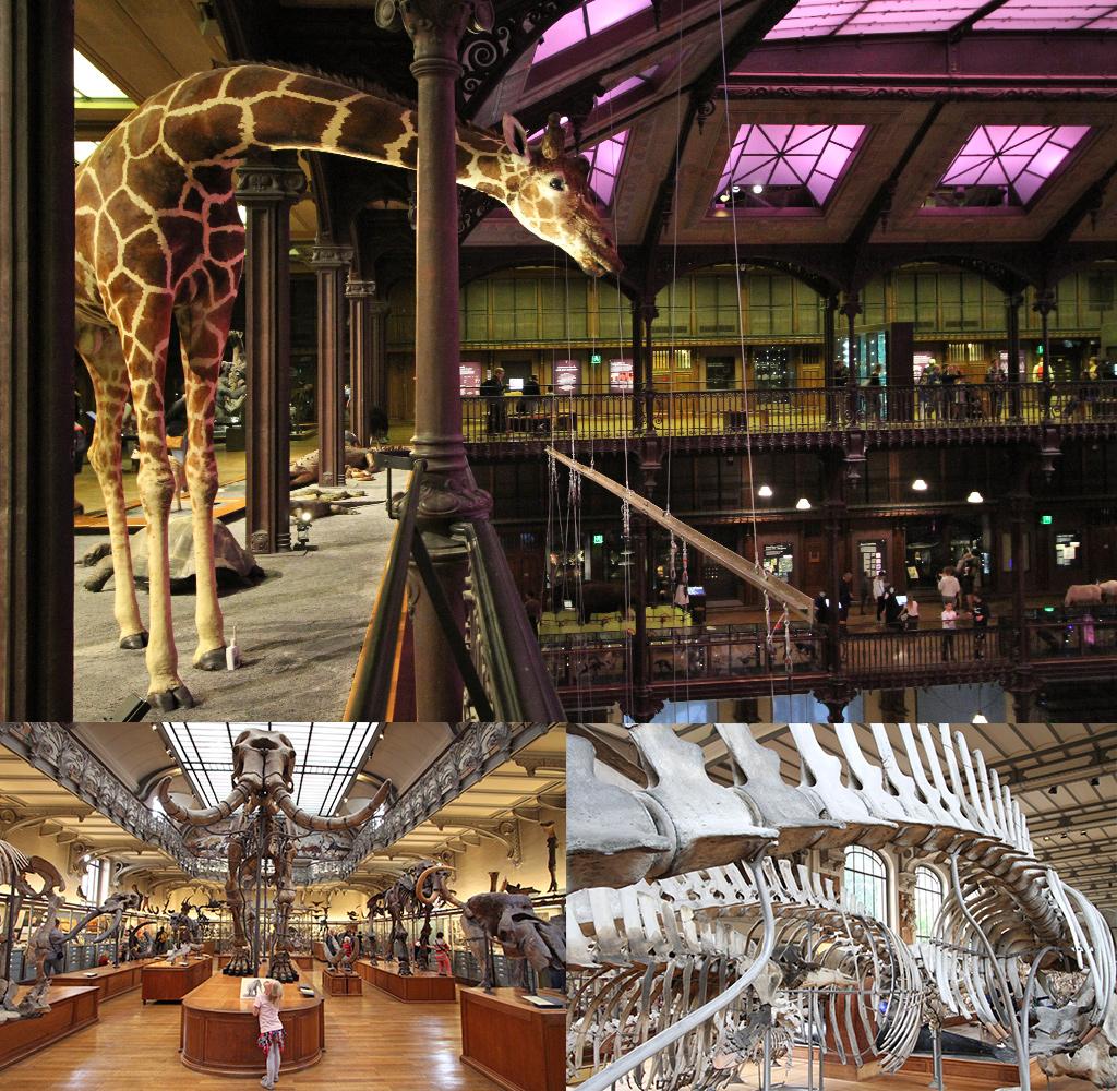 Jardin des Plantes - populairste musea