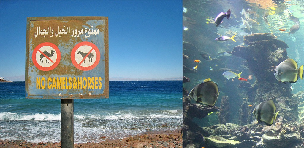 Snorkelen in Dahab