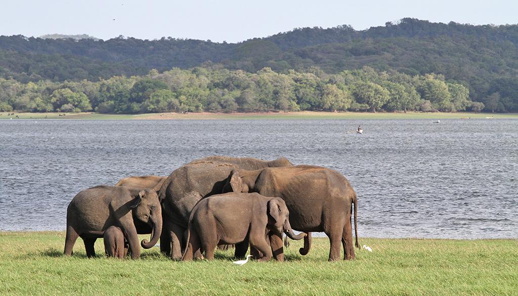 Sri Lanka budgetvriendelijke bestemming