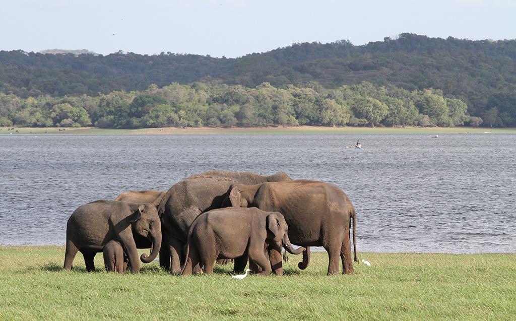 Sri Lanka verre reis met gezin