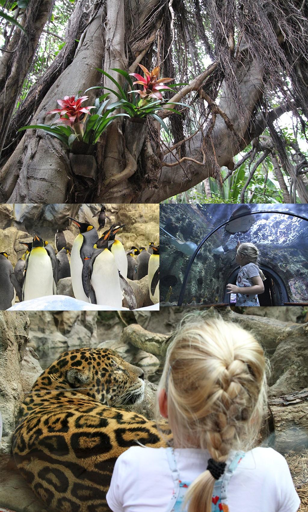 Tenerife met kinderen - Loro Parque