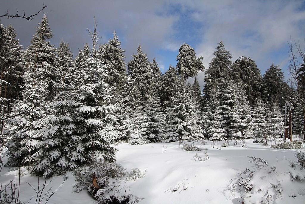 Thüringerwald - februari