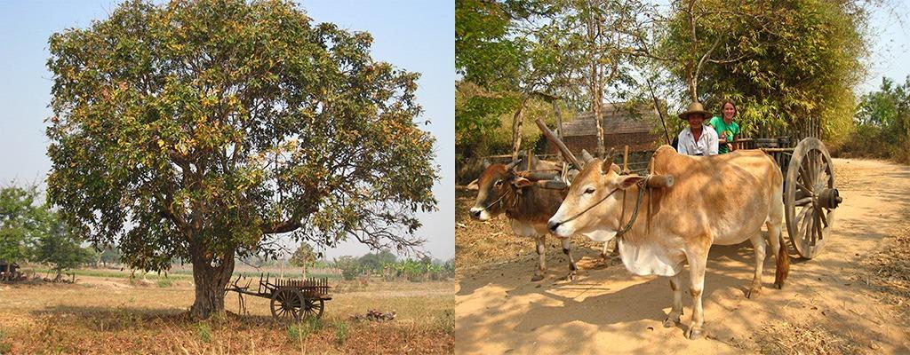 Thayekhittaya of Sri Ksetra