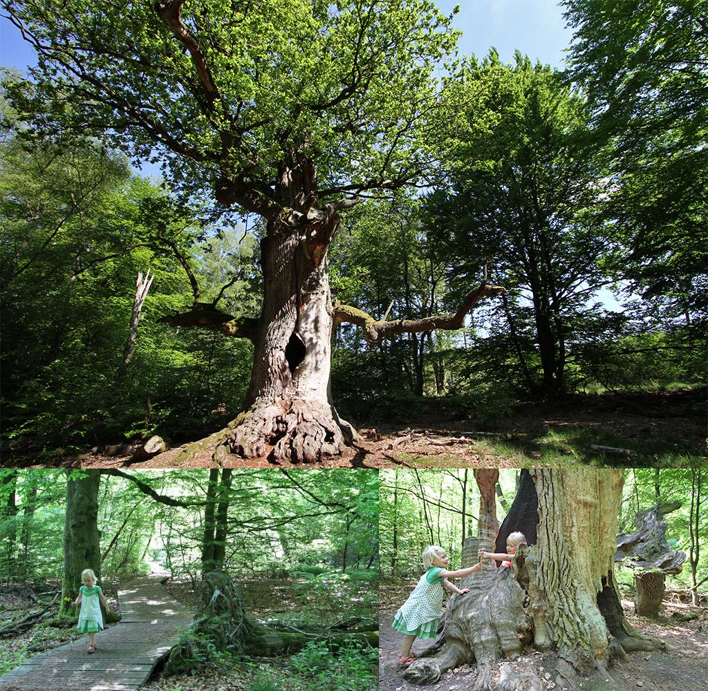 Het Urwald Sababurg