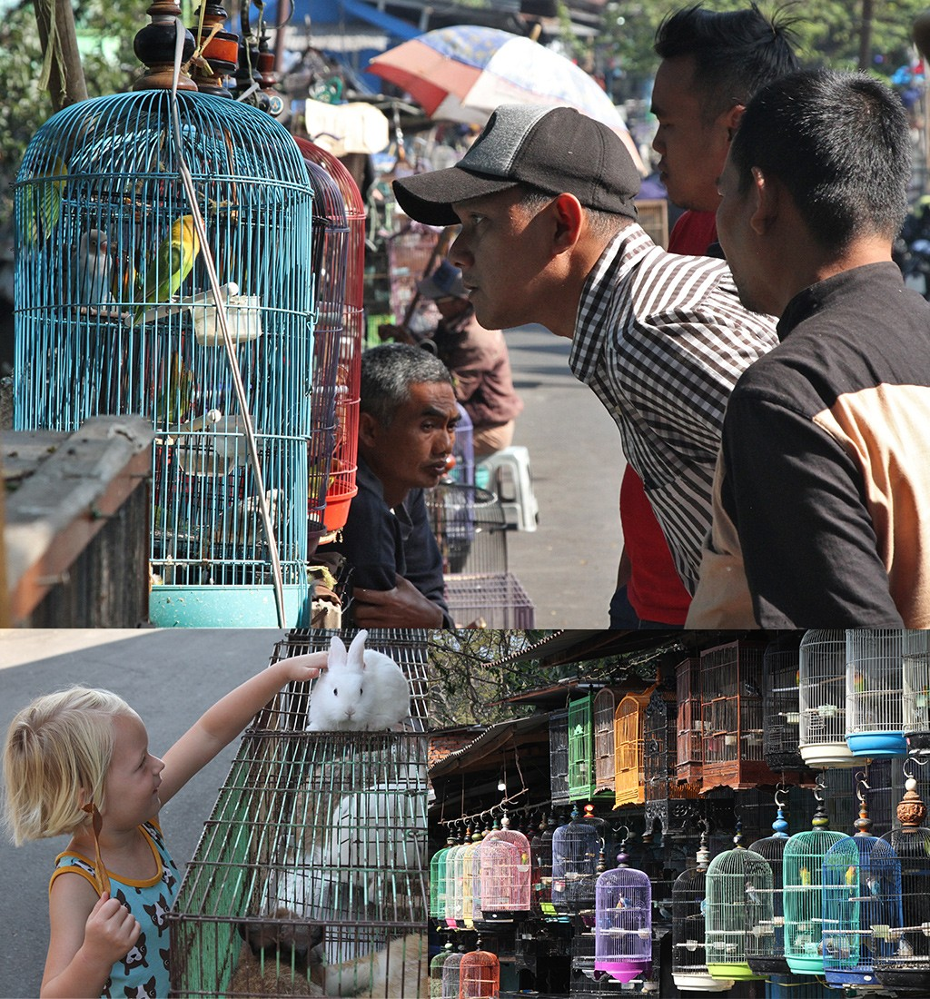 Vogeltjesmarkt Malang Java