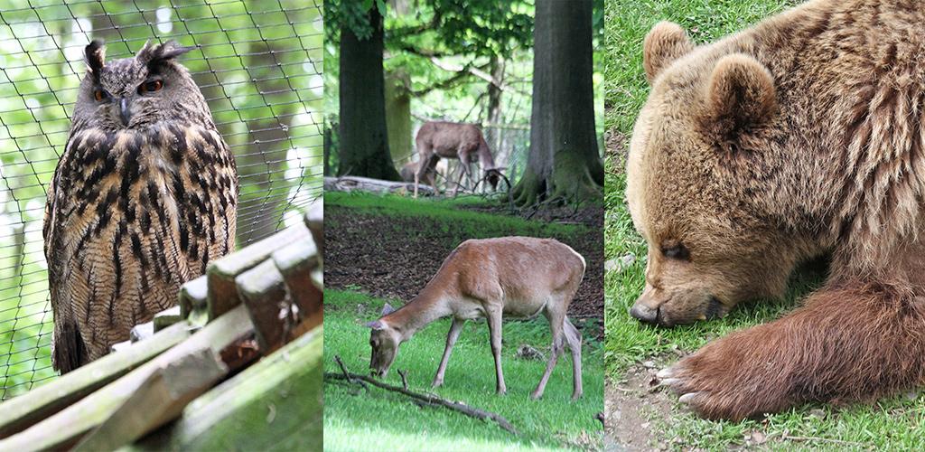 Wildpark Knüll Nordhessen