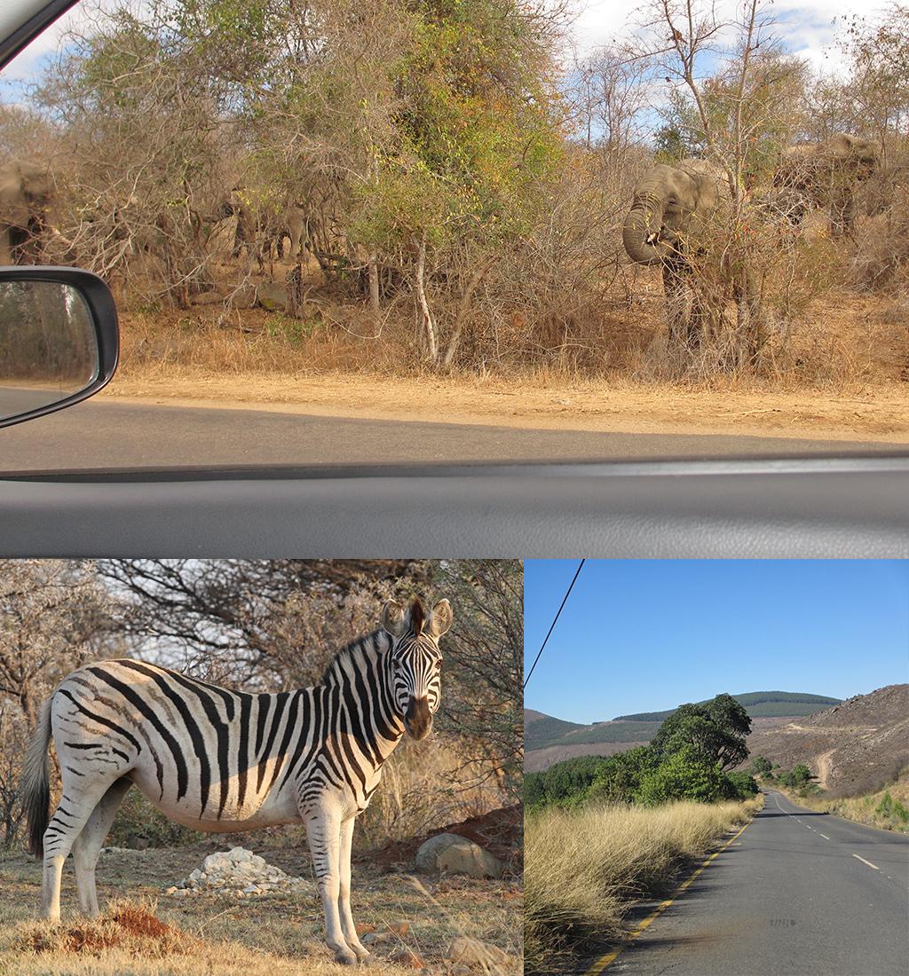 Zuid-Afrika route Kruger naar Bulembu