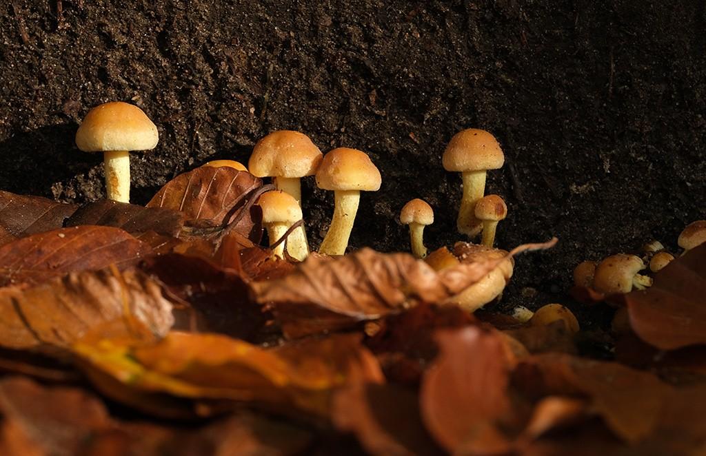 diafragma 6.4 alle paddenstoelen scherp