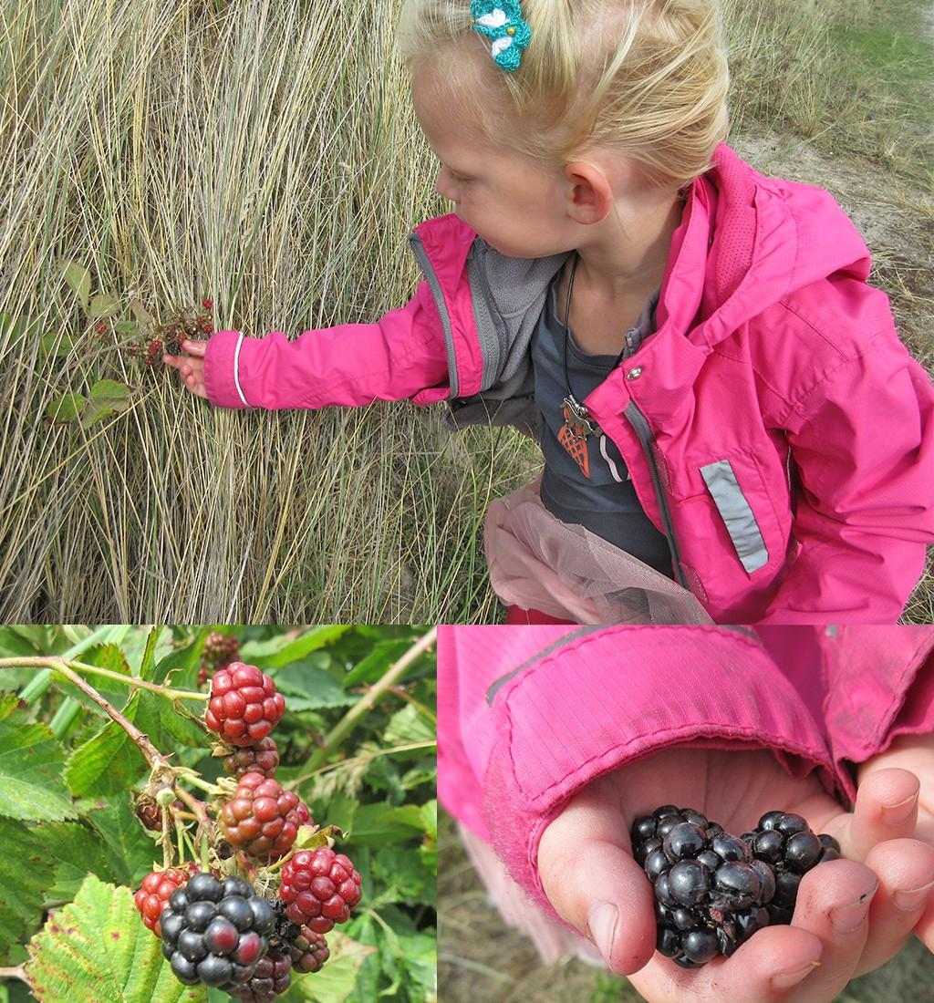 doen op Ameland met kinderen - bramen plukken