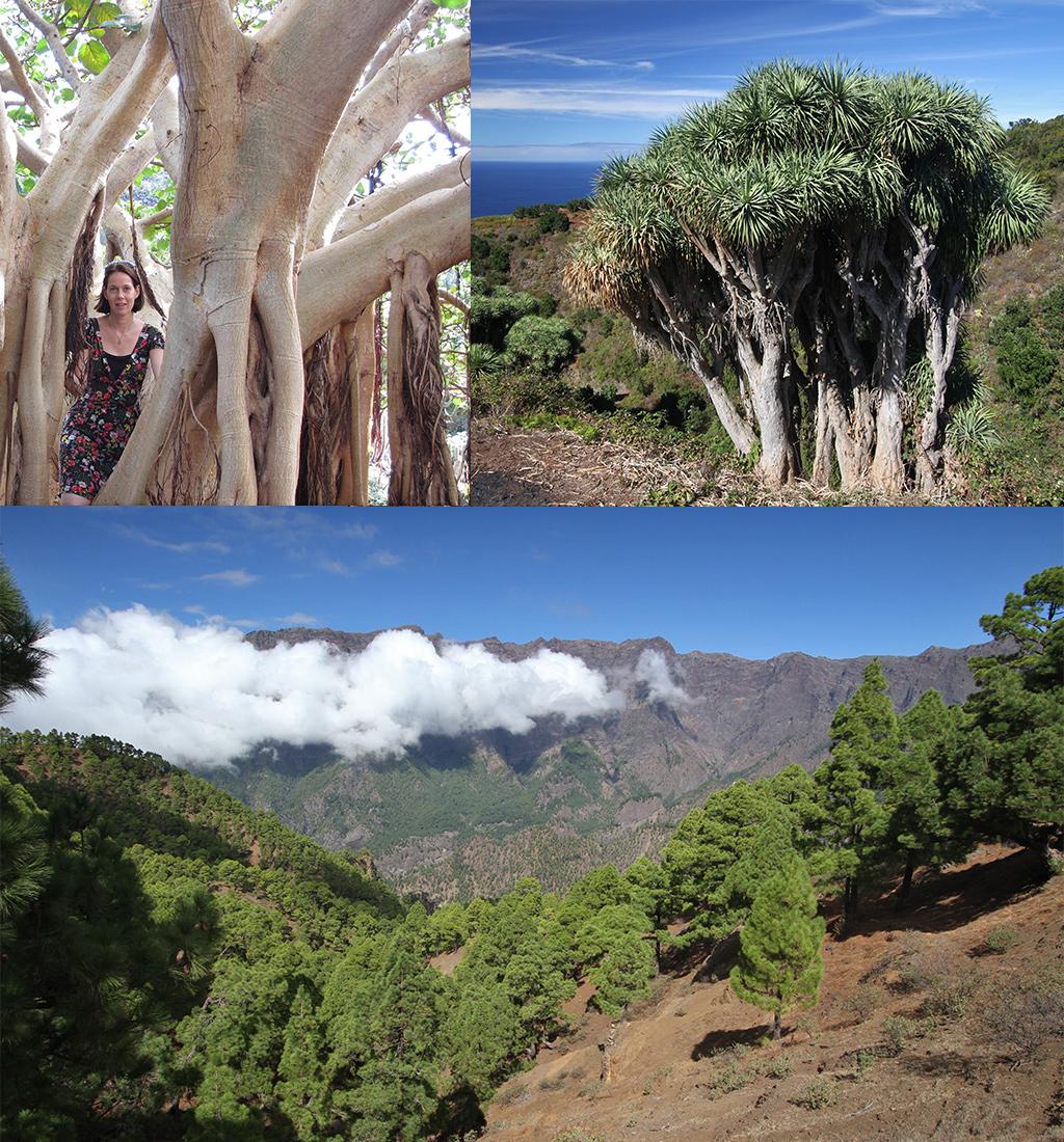 eilandhoppen Canarische eilanden - La Palma