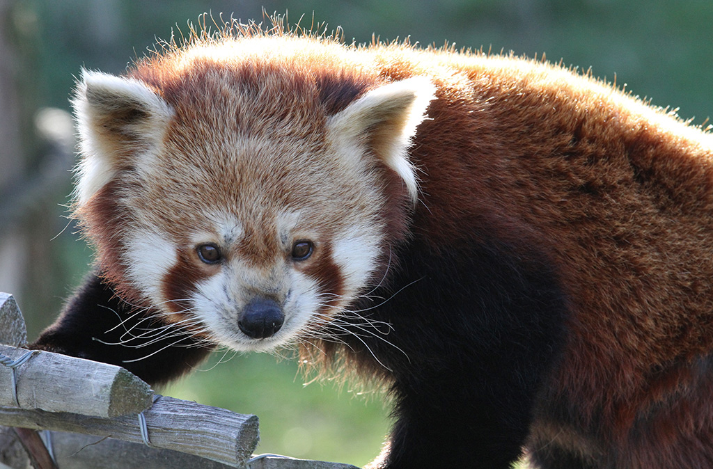 foto safari dierentuin steeds betere foto's