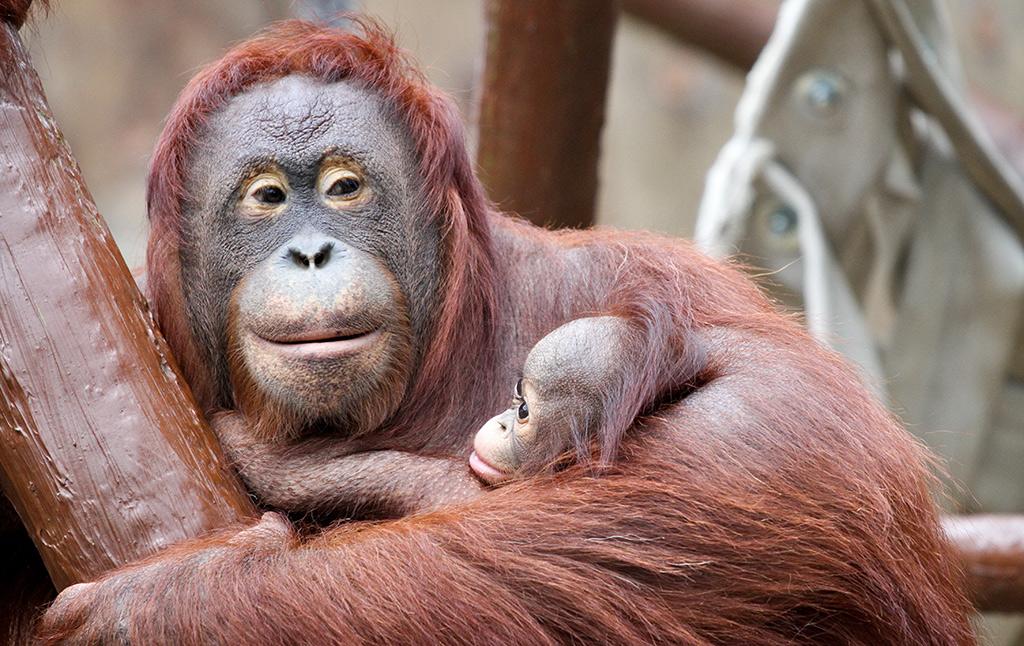 foto safari in de dierentuin Krefeld binnenverblijven