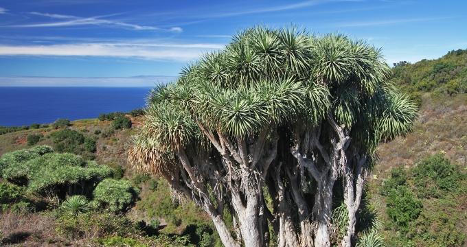 fotogenieke plekken Canarische eilanden