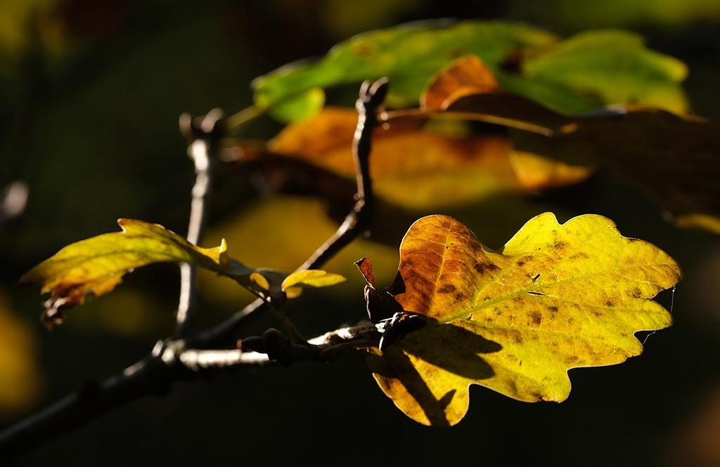 fotograferen is schrijven met licht