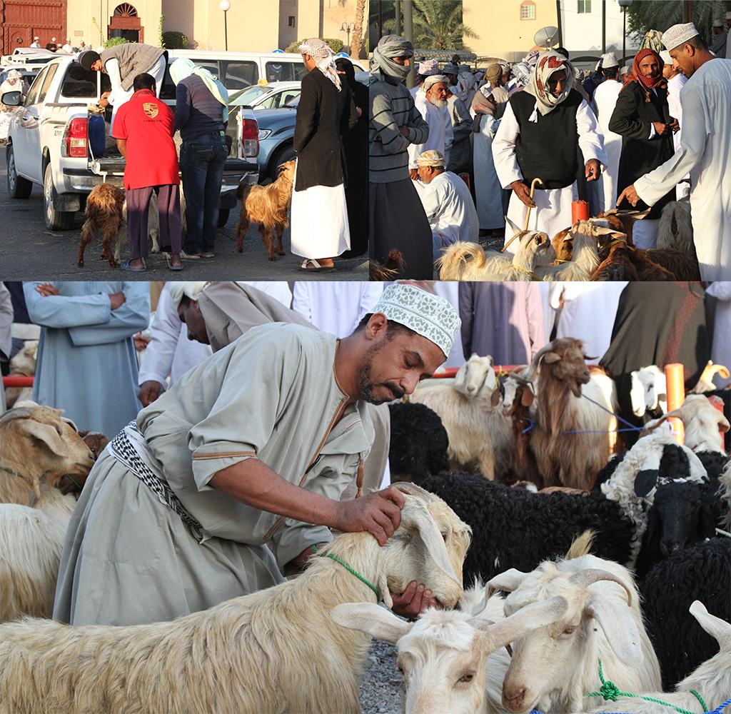 geitenmarkt Nizwa - start van de dag