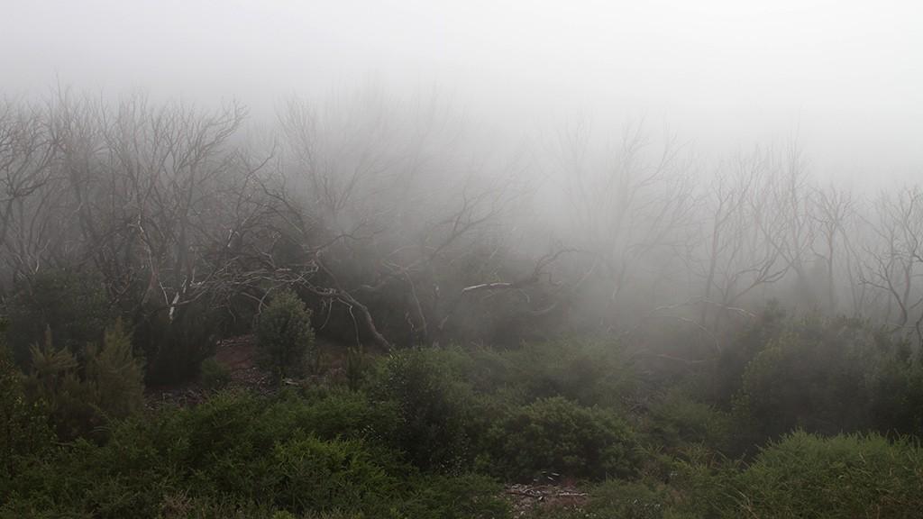 het beste licht voor jouw foto is soms mist