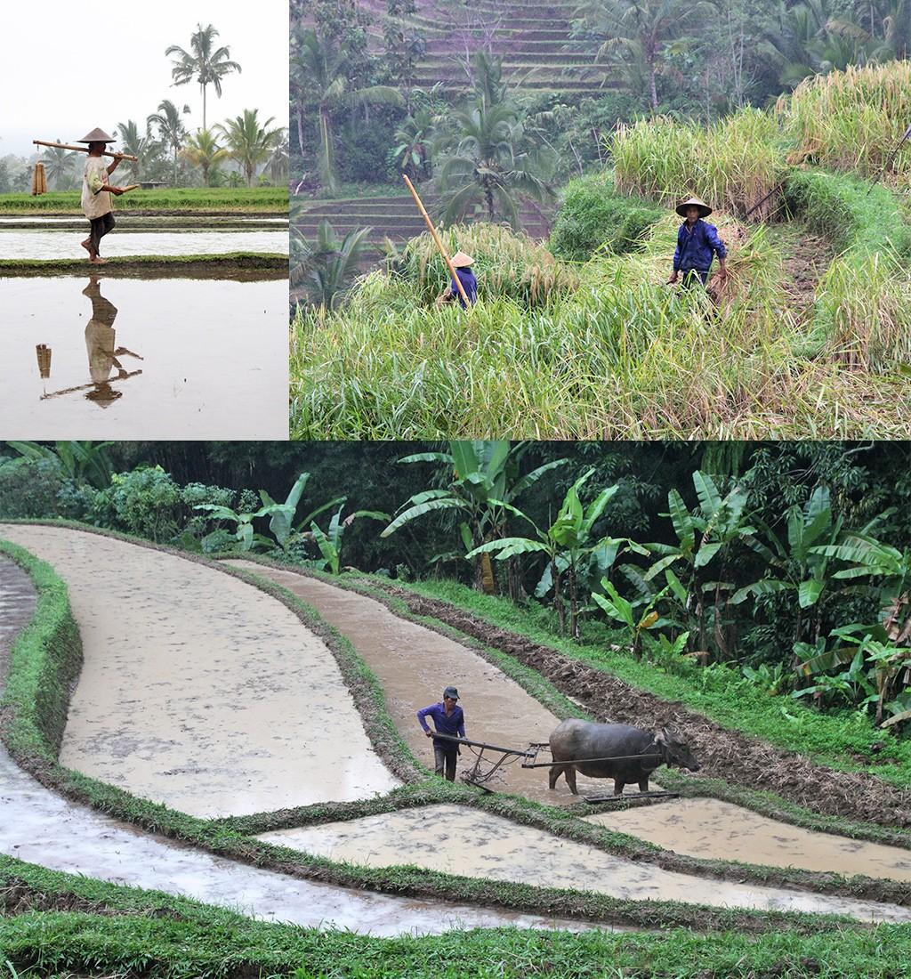 het echte Bali zonder toeristen