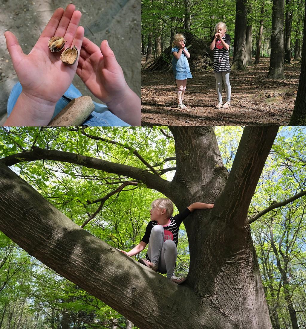 klimbomen Kwintelooyen