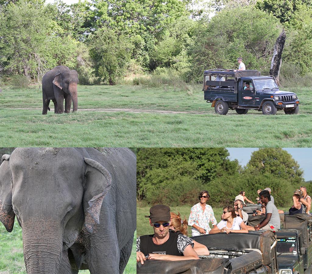 Lege jeeps en filevorming tijdens een Sri Lanka safari