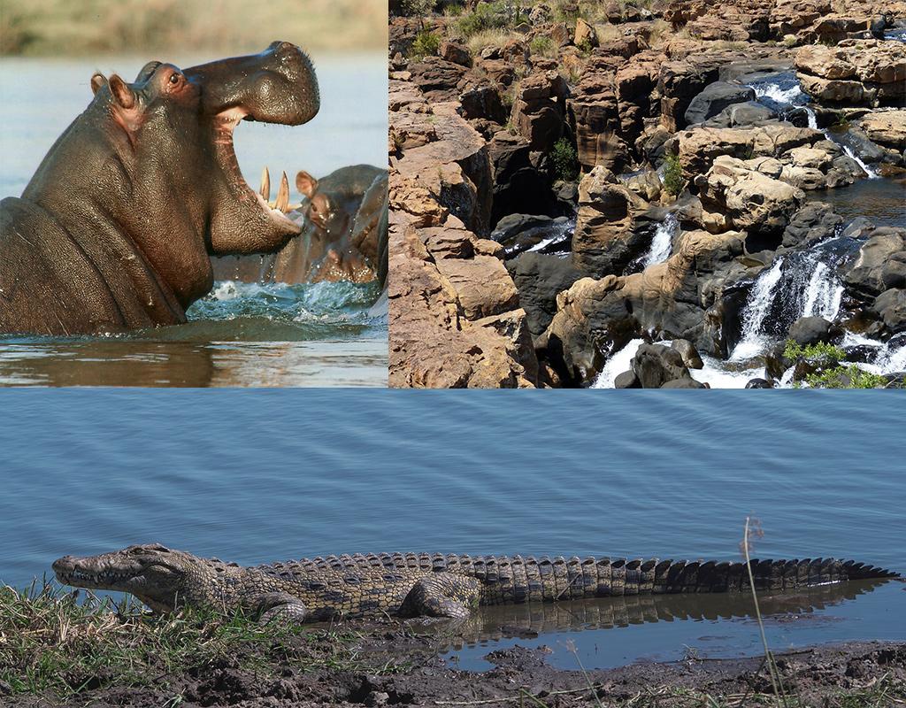 nijplaarden en krokodillen