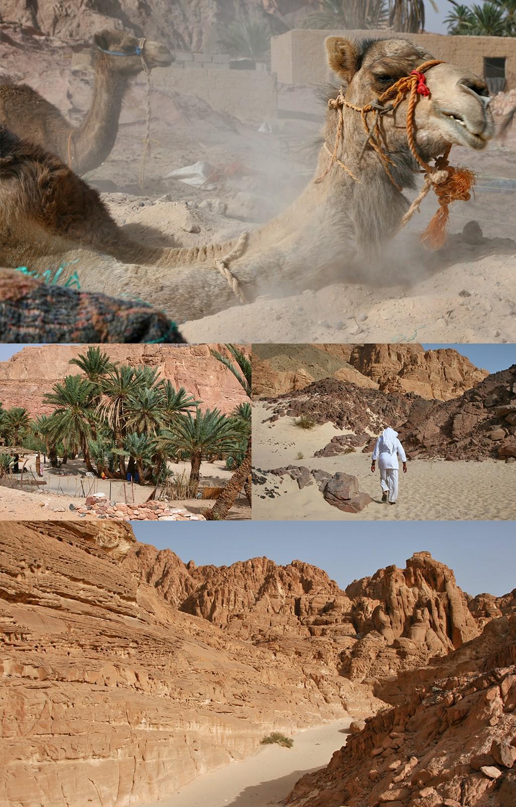 oase en White Canyon vanuit Dahab