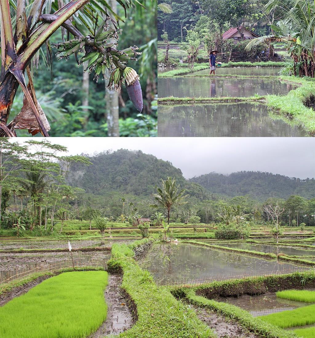 omgeving homestay Sidemen Bali