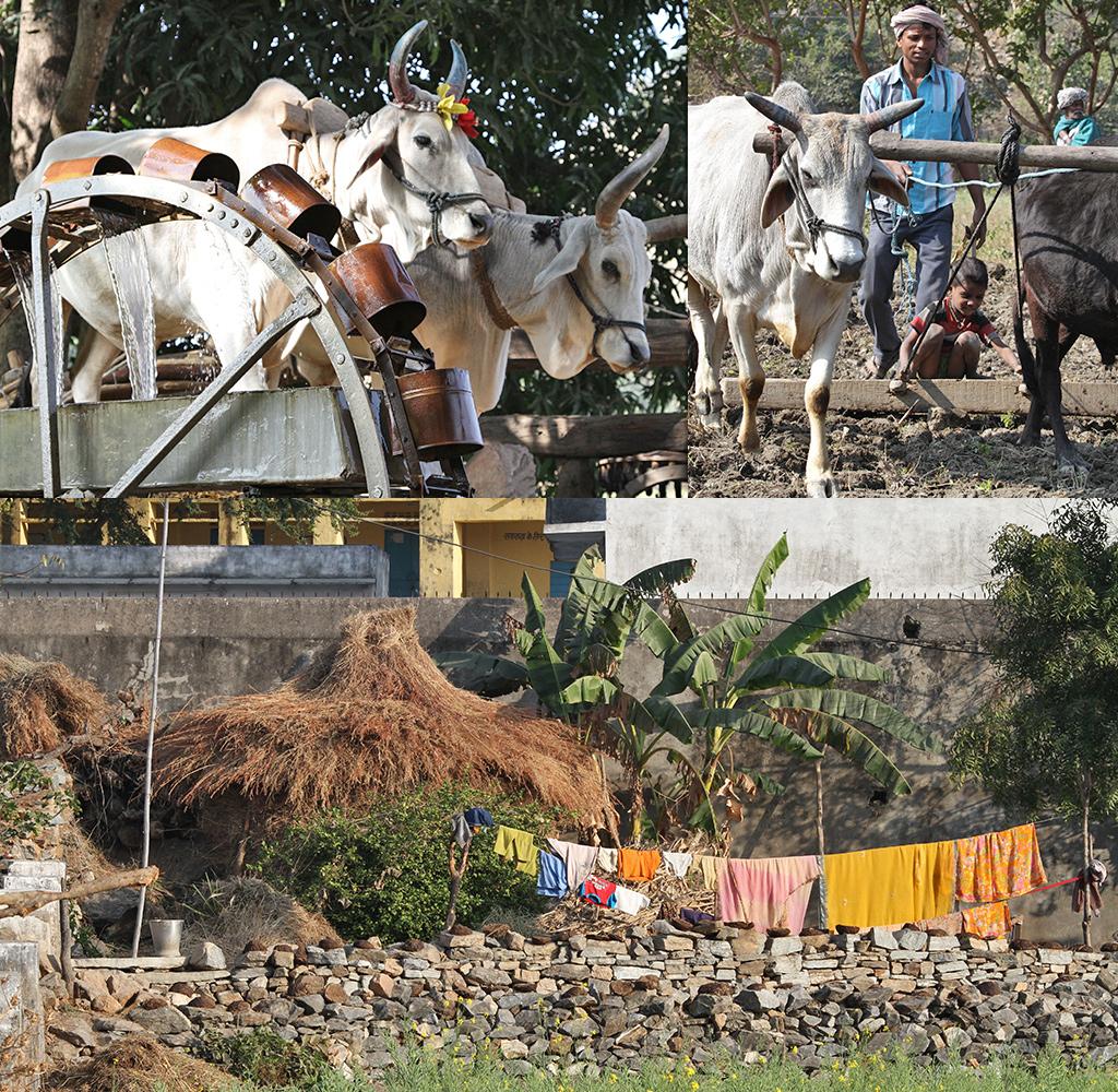 platteland onderweg naar Udaipur