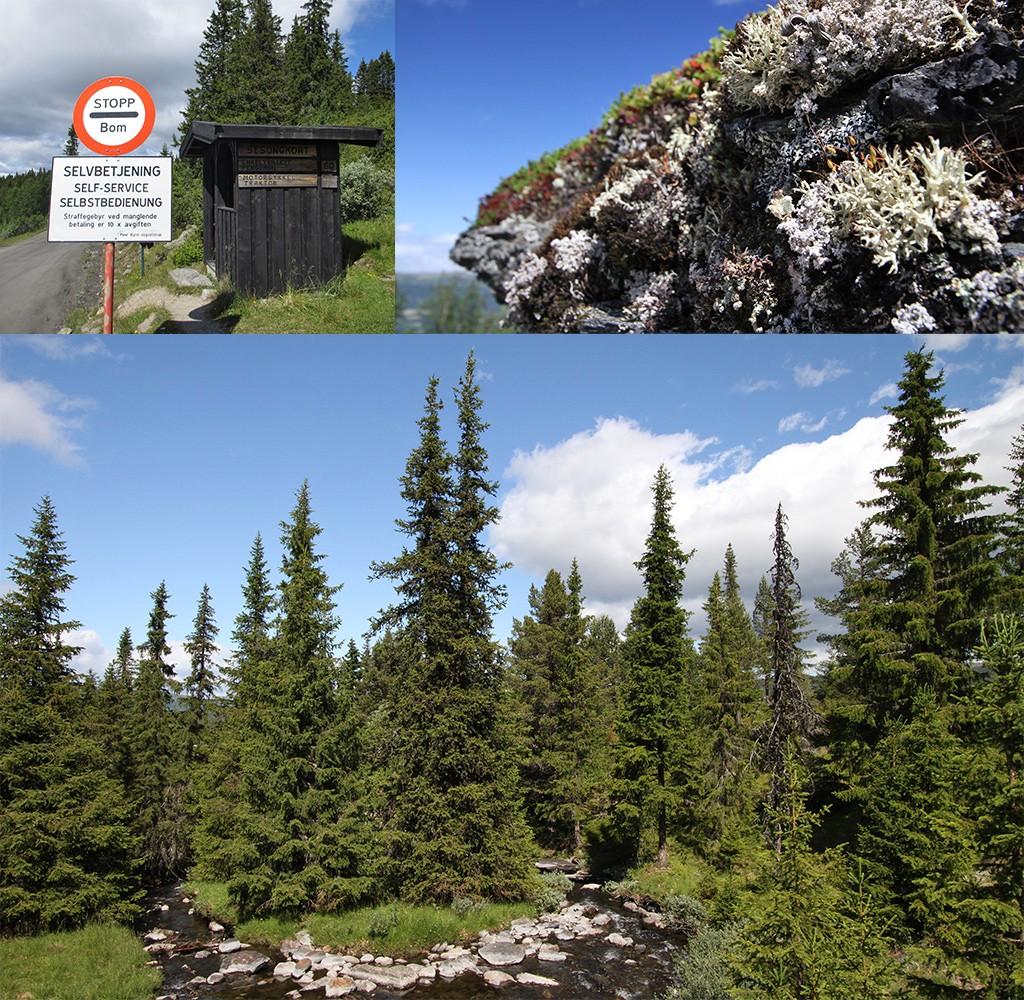 roadtrip Noorwegen - Peer-Gyntweg