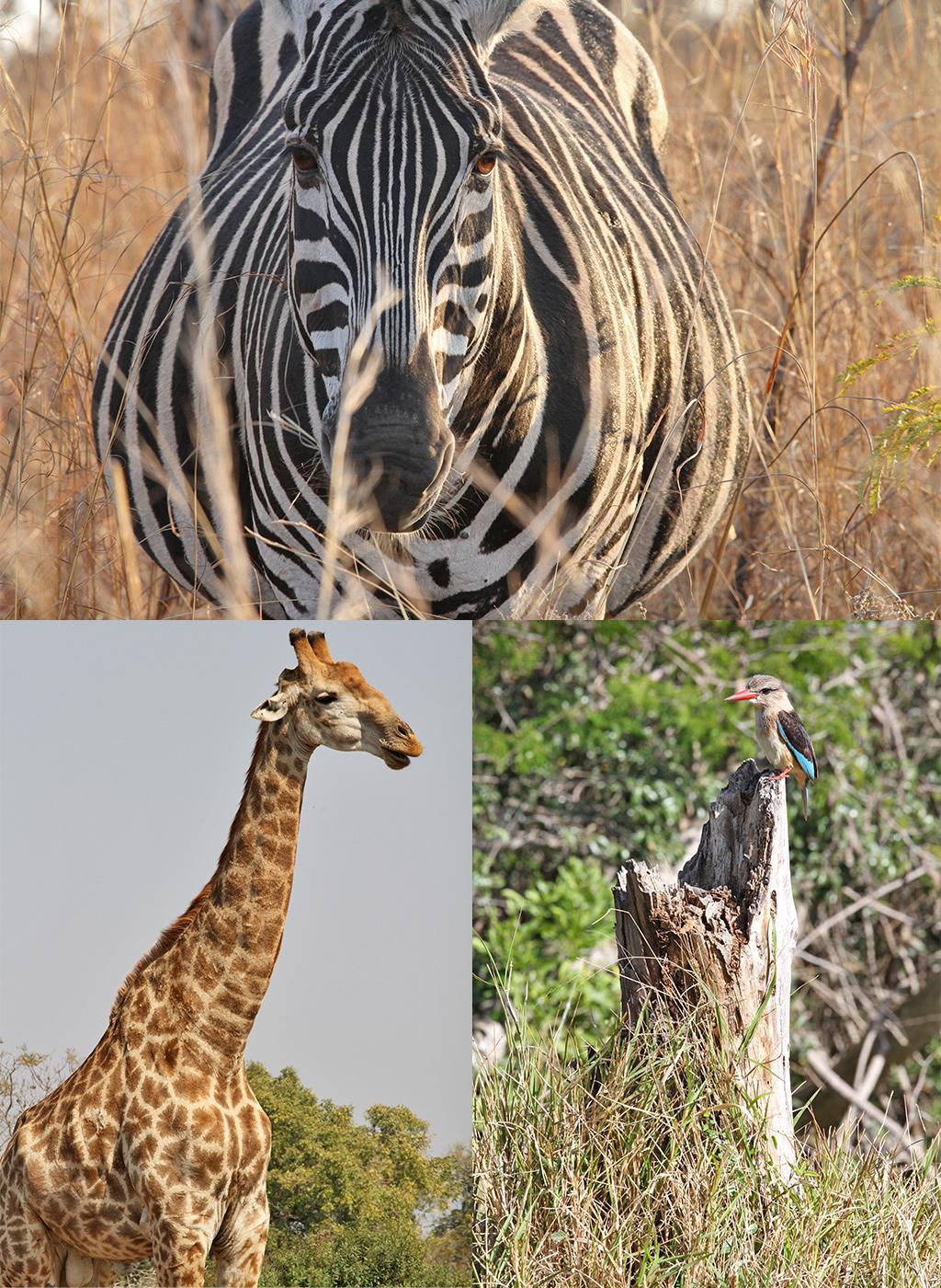 safari Afrika niet te overtreffen