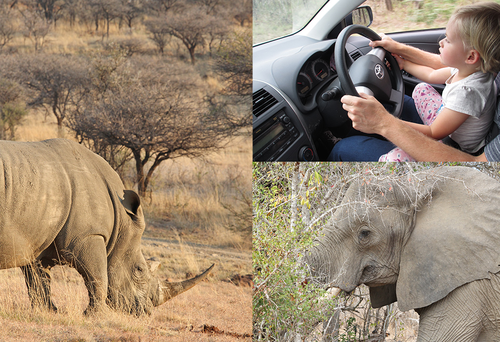 safari Afrika self-drive